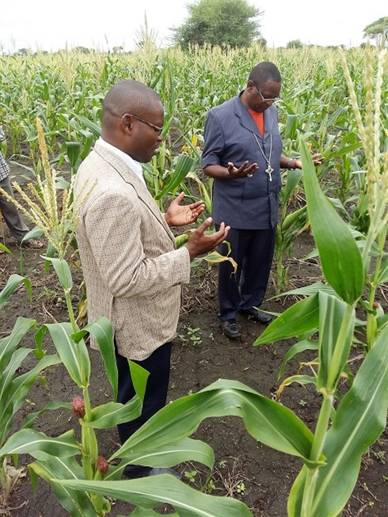 Diocese Of Kondoa Tanzania Drought Resistant Maize